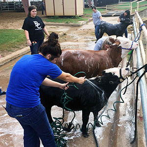 Blinn-Brenham students clock over 1,000 hours volunteering at Washington County Fair